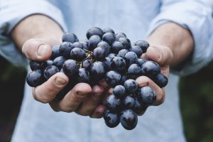 hand full of blue grapes
